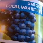 Unique Bulgarian Wine Varieties You Must Taste